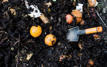 composting in harlem
