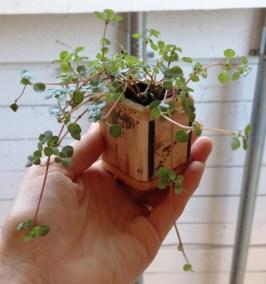 Miniature Box Planter