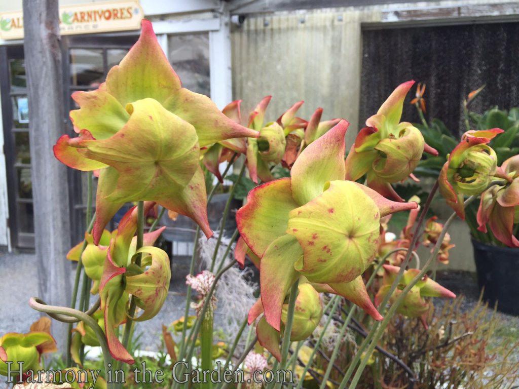 Fullsize Of Carnivorous Plant Terrarium