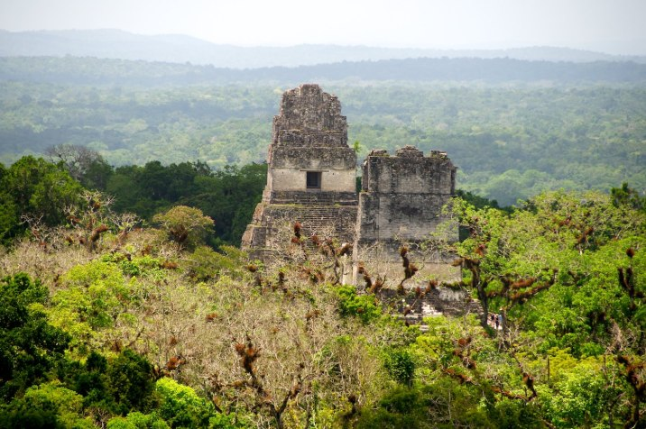 Temples poke through the forest canopy and give scale to the size of Tikal.