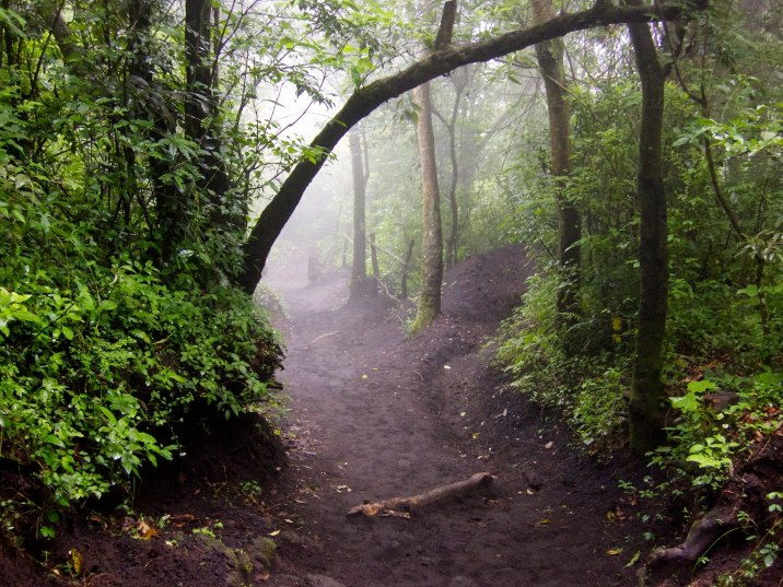 The trail up the mountain, doused in fog.