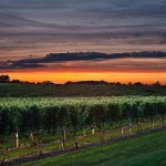 Depression Treatment Courtesy of the Beauty of Nature. See how a simple vineyard can you put you on the road to recovery from depression.