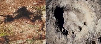Mokele Mbembe Footprint