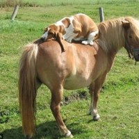 Nämä koirat eivät usko henkilökohtaiseen tilaan! - Katso hauska kuvasarja