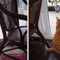 Kissat elivät uudelleen lapsuudenhetkensä! - Katso ihastuttava kuvasarja