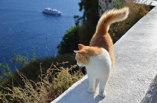 Katze am Meer