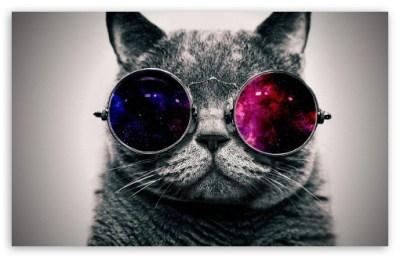 cat cooler 4K HD Desktop Wallpaper for • Wide & Ultra Widescreen Displays
