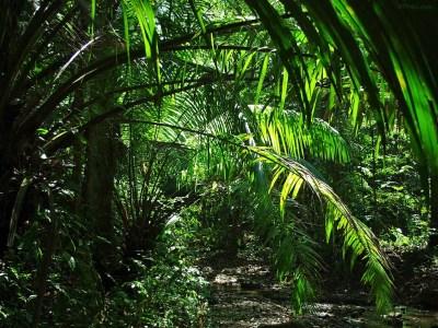 Jungle Wallpapers Archives - HD Desktop Wallpapers | 4k HD