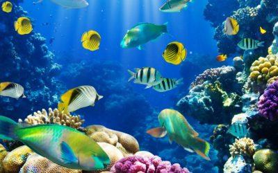 fish wallpaper live - HD Desktop Wallpapers   4k HD