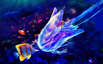 jellyfish live wallpaper - HD Desktop Wallpapers   4k HD