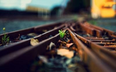 plant wallpaper railway rails - HD Desktop Wallpapers | 4k HD