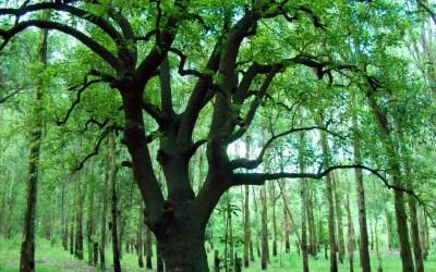 tree wallpaper cool - HD Desktop Wallpapers | 4k HD