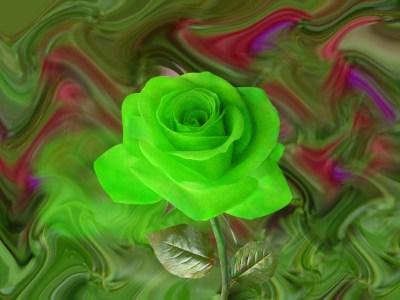 10 Green rose Backgrounds - HdFlowerWallpaper.com