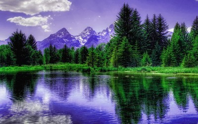 Purple Mountains behind the trees HD wallpaper | HD Latest Wallpapers