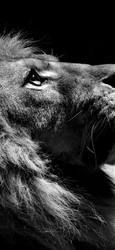 1125x2436 Lion Black And White Iphone XS,Iphone 10,Iphone X HD 4k Wallpapers, Images ...