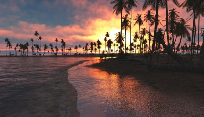 1336x768 Palm Trees Sunset Sea Laptop HD HD 4k Wallpapers, Images, Backgrounds, Photos and Pictures
