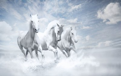 3840x2400 White Horses HD 4k HD 4k Wallpapers, Images, Backgrounds, Photos and Pictures