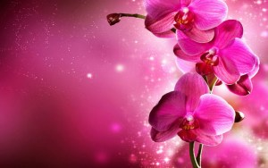 Orchid-flowers-34014998-1440-900