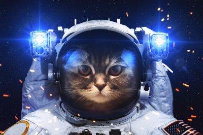 astronaut, Cat HD Wallpapers / Desktop and Mobile Images & Photos