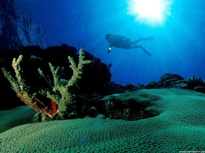 Cool Underwater Wallpapers   High Definition Wallpapers, High Definition Backgrounds