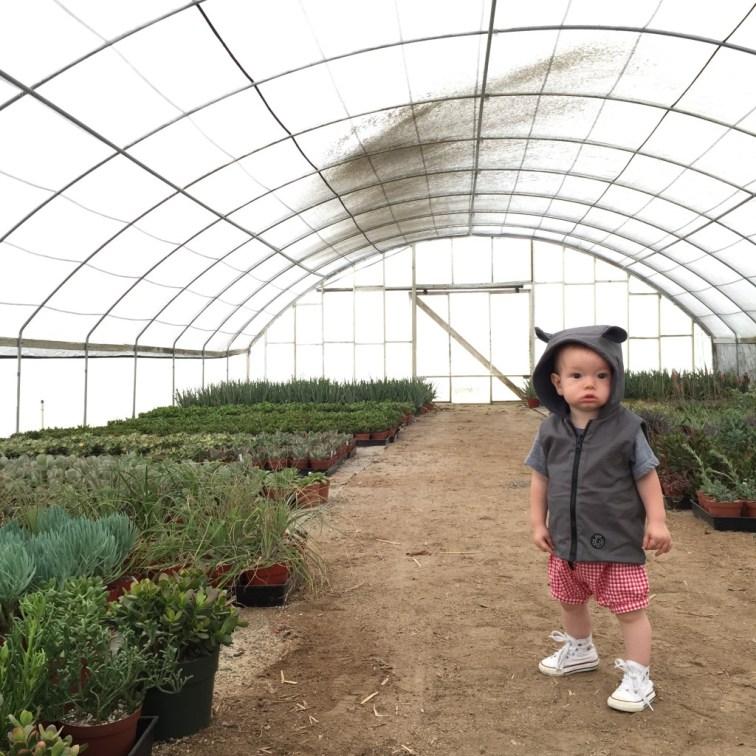rotated garden