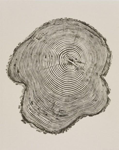 tree trunk print