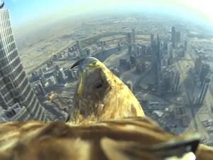 eagle_3_3232712b