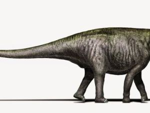 Brontosaurus_Copyright_DavideBonadonna-1.0