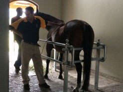 Equine Care & Services