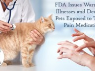 Topical Medication Pets