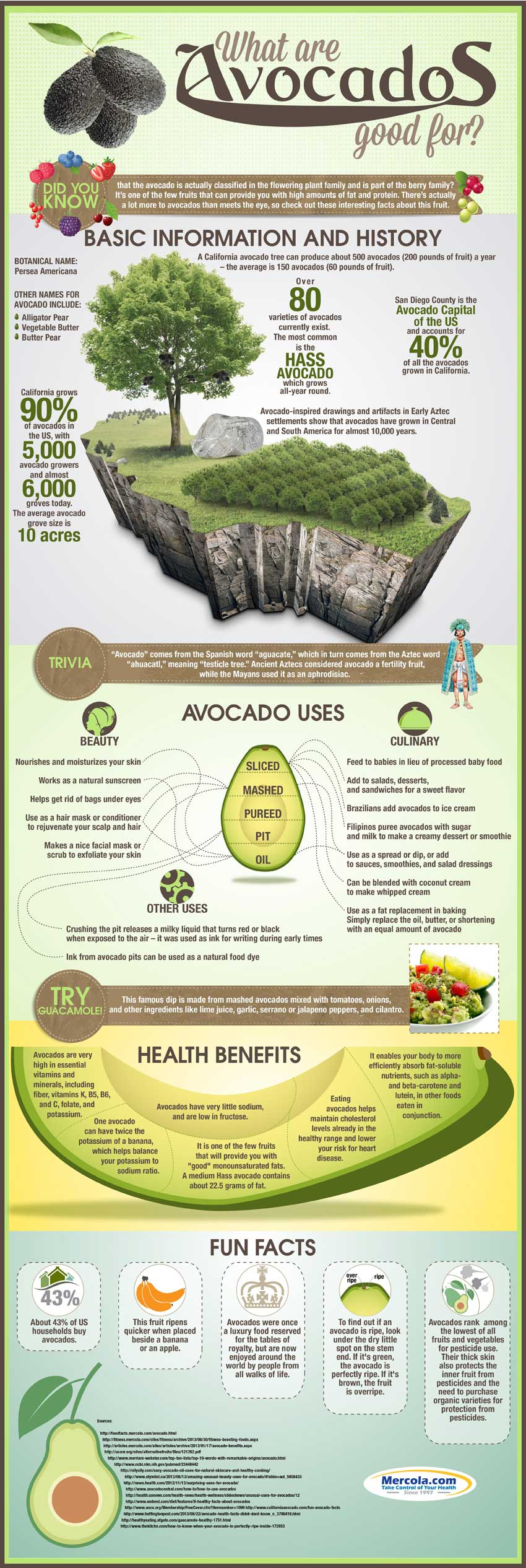 avocado-uses-health-benefits