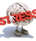 """human brain with arts that embraces a word """"stress"""", 3d illustration"""