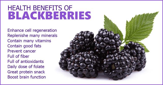 Blackberries_Sweet_Curative_Satisfaction