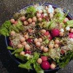 salad_lettuce_romaine_674198_l