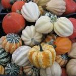 Six Best Pumpkins To Cook and Roast