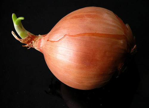Onion - Liz West