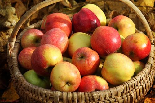 An apple a day - Alice Popkorn