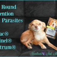 Year Round Prevention from Parasites with #SentinelSpectrum