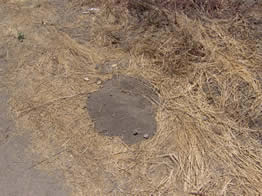 Gopher mounds in dry patches need to be treated carefully so that the dirt does not collapse on the treatment product.