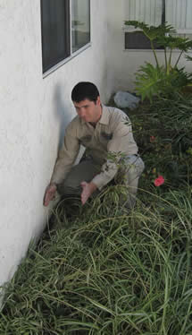 Inspector charts home, Landscaping