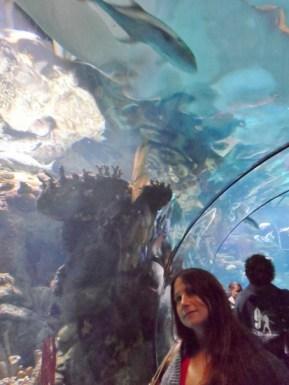 Henry Doorly Zoo & Aquarium jeanne viewing tunnel