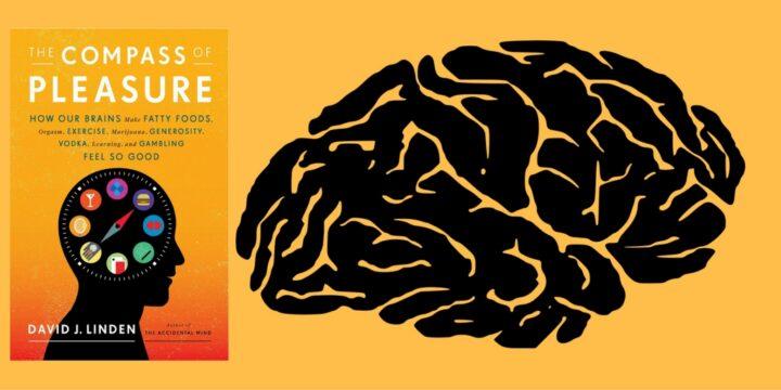 التزاوج والسلوك الجنسي عند البشر والحيوانات - ديفيد ليندن / ترجمة: خالد البدراني