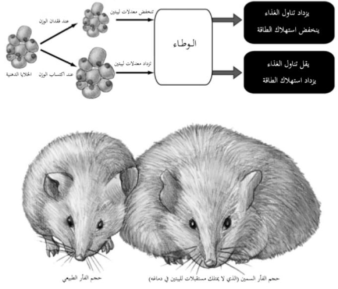 COP FOOD illustration