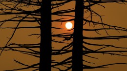 The sun is seen through a smoked filled sky as a charred tree stands near a destroyed home in Santa Rosa, California, USA, 09 October 2017. Multiple wildfires are scattered through out Napa, Sonoma and Mendocino counties, leaving at least 10 people dead and destroying homes and businesses in their path. EPA, JOHN G. MABANGLO