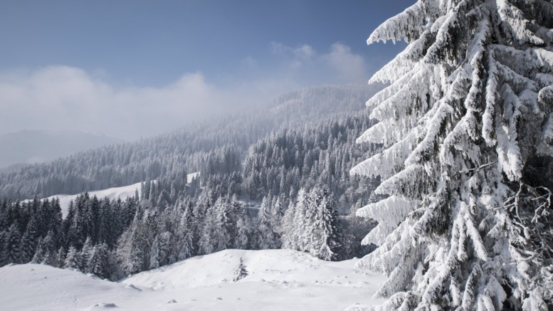 Trees covered in snow in a forest near Glaubenberg in the canton of Obwalden, Switzerland, 28 February 2018. Media reports state that extreme cold weather is forecast to hit many parts of Europe with temperatures plummeting to a possible ten year low. EPA, URS FLUEELER
