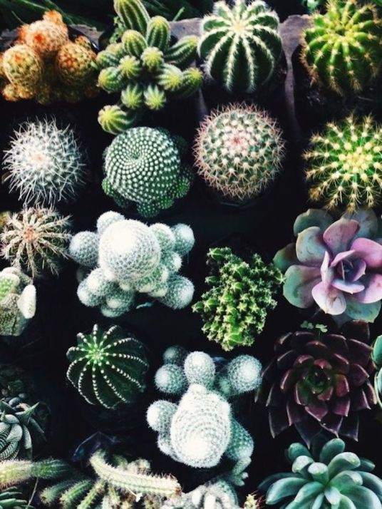 Ces plantes qui ne n cessitent pas d 39 entretien h ll blogzine - Plantes qui ne craignent pas le gel ...