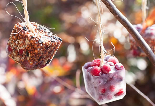 Birdseed Ornaments | Henry Happened