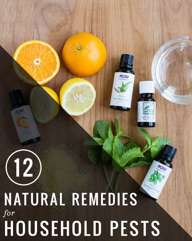 12 Natural Remedies for Household Pests | Hello Glow
