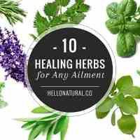10-healing-herbs-any-ailment-newsletter-hn