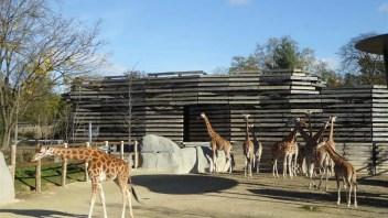 Paris Zoo: Besuch im Zoo von Paris (Zoo de Vincennes)